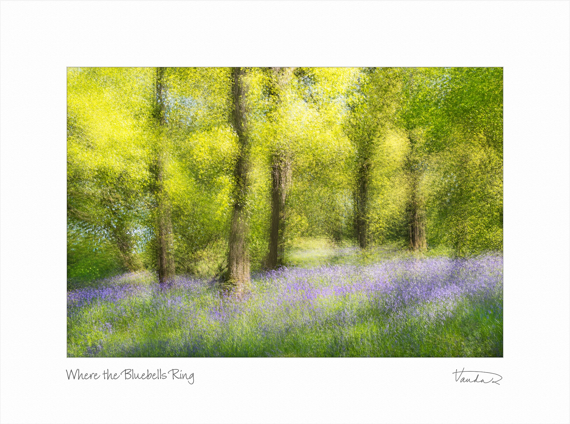 Where The Bluebells Ring
