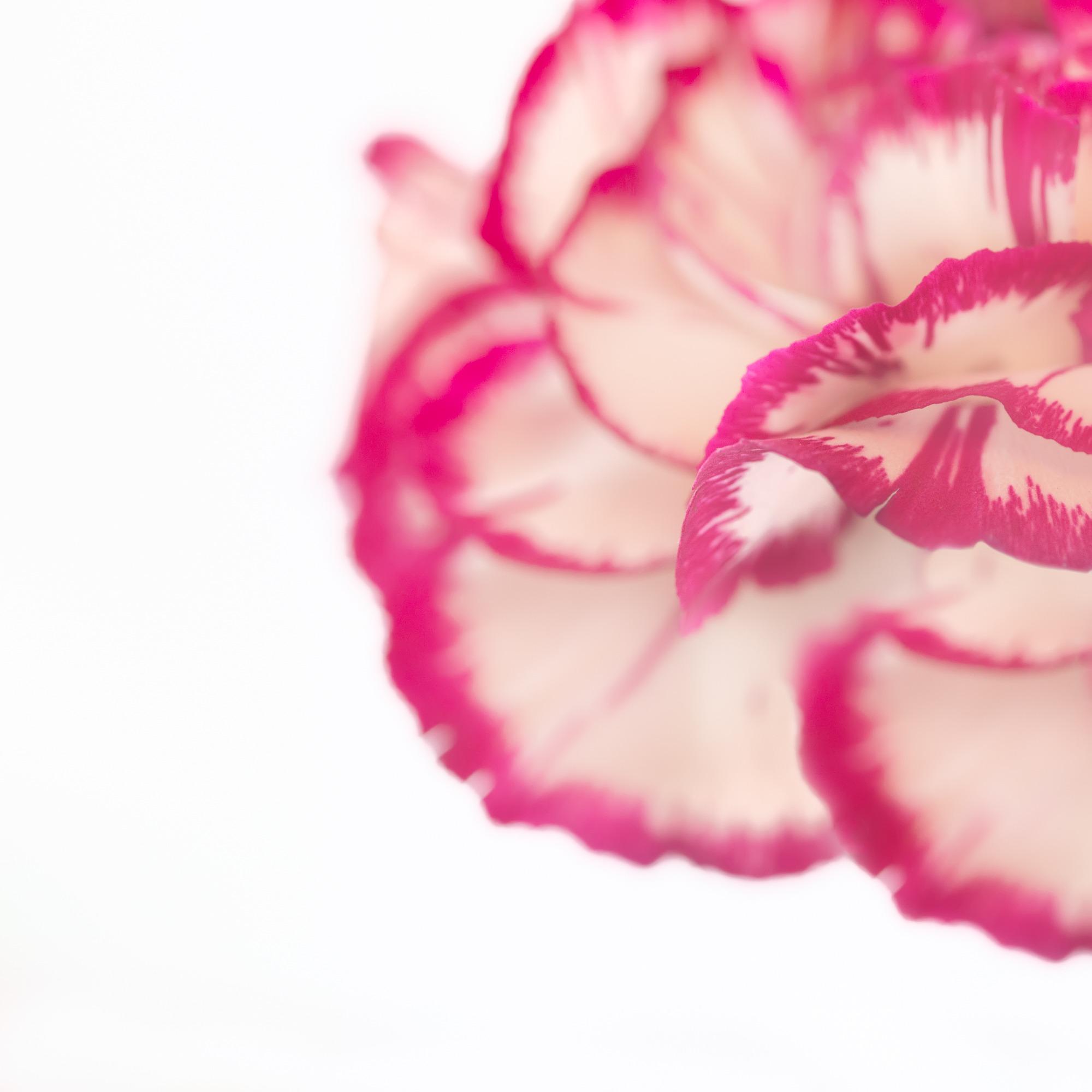 Gentle Petals