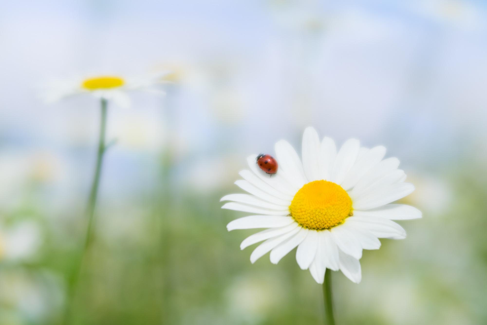 Ladybird Wishes