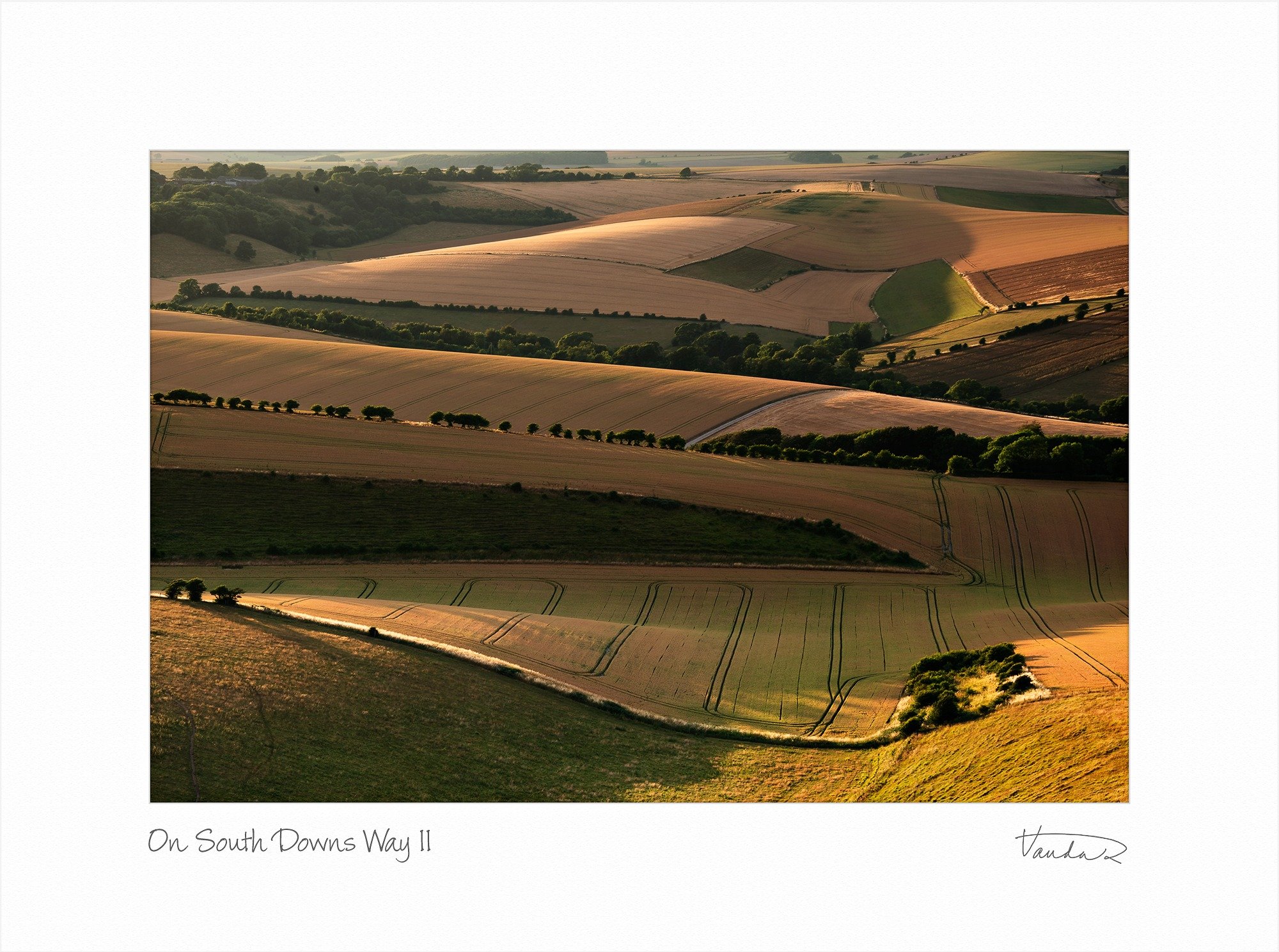On Southdowns Way II