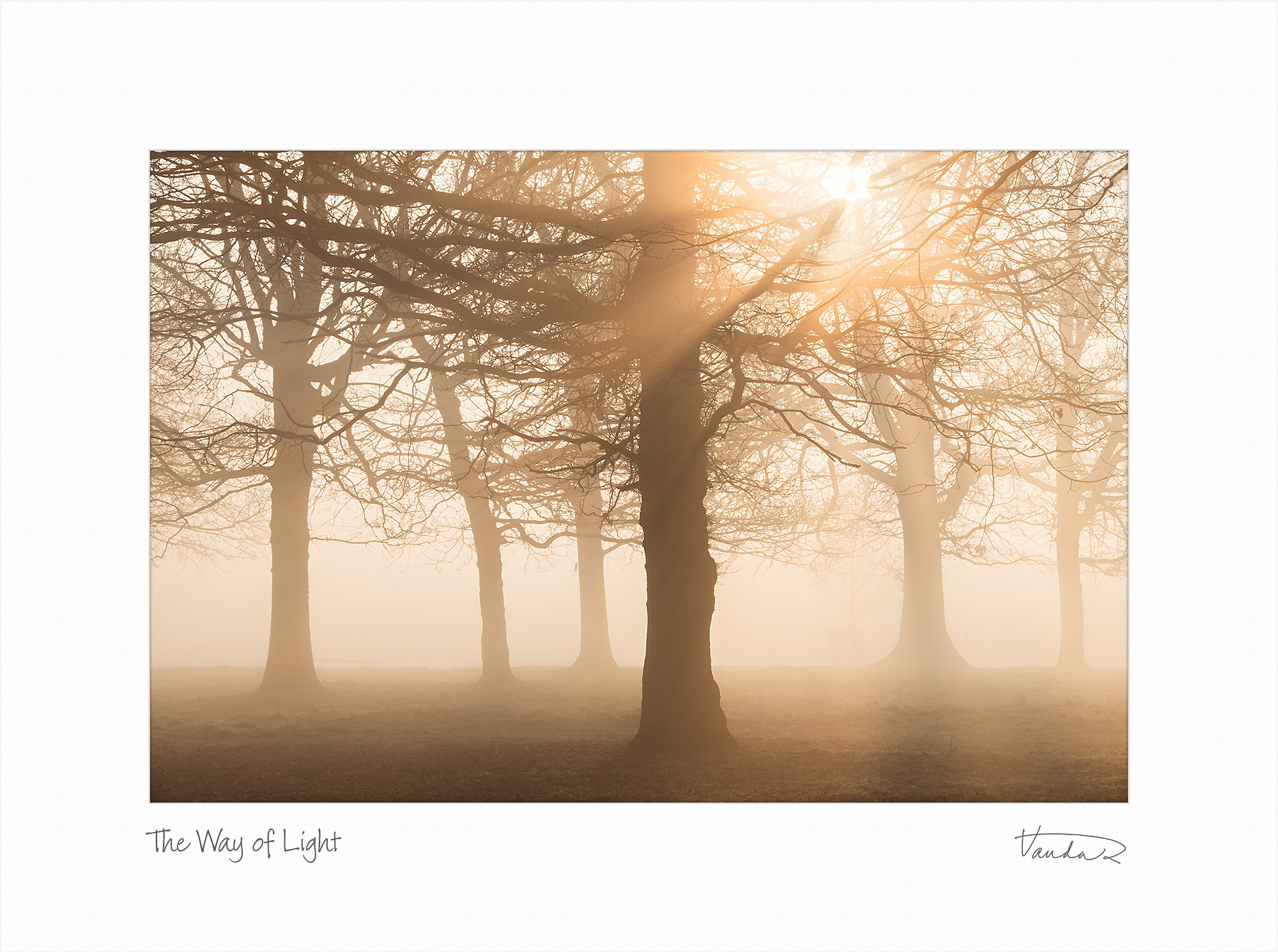 The Way of Light