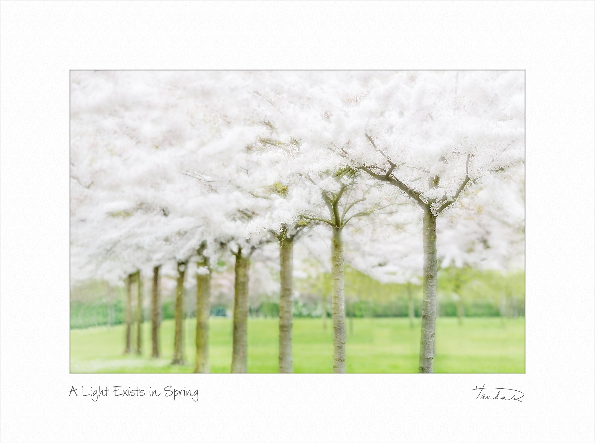 A Light Exists in Spring