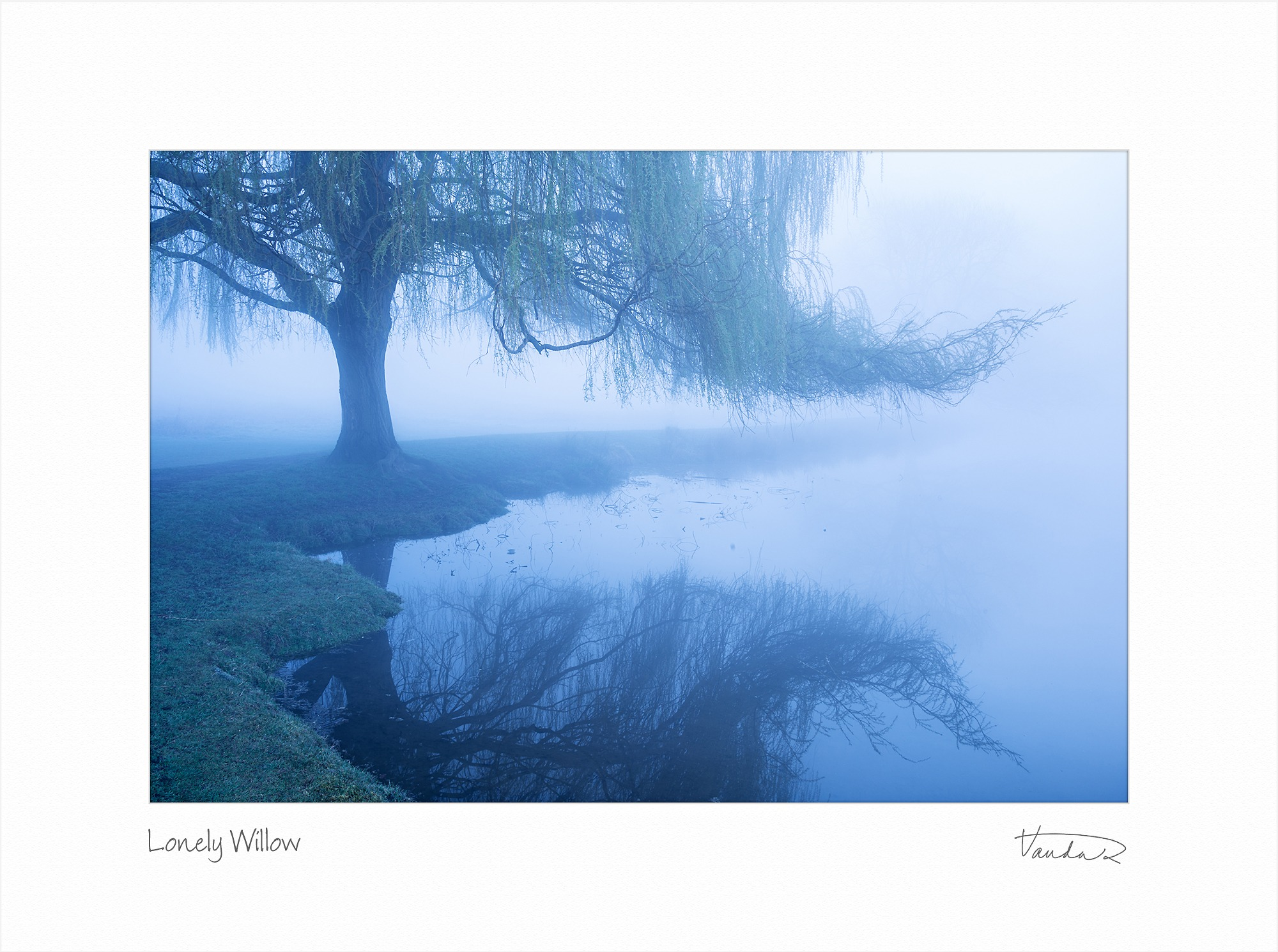 Lonely Willow