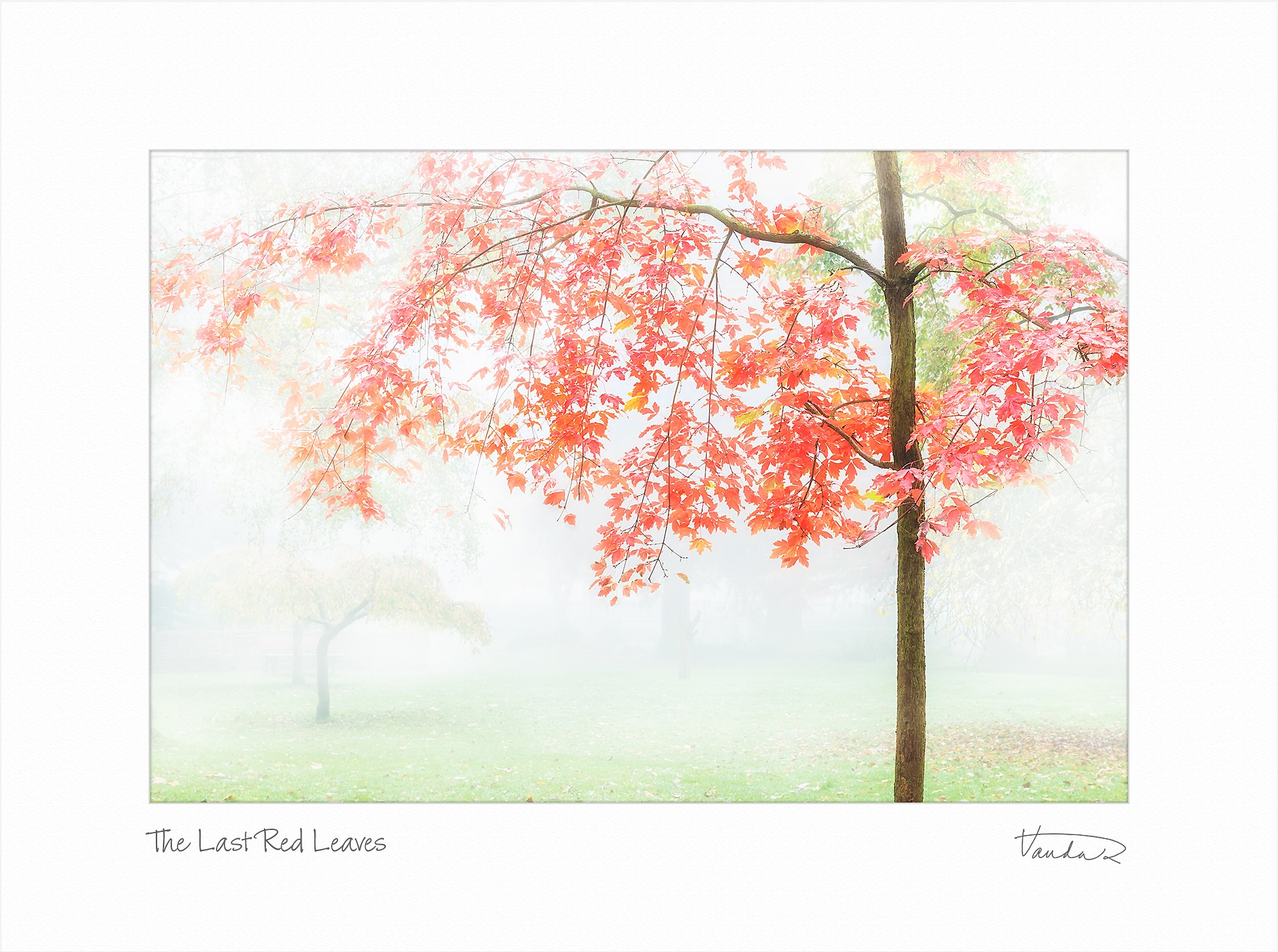 The Last Red Leaves