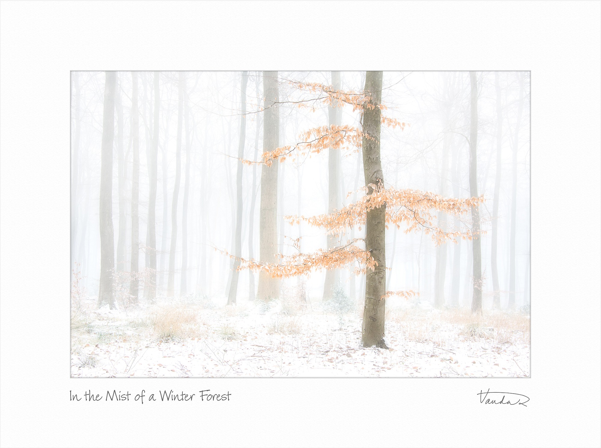 In the Mist of a Winter Forest