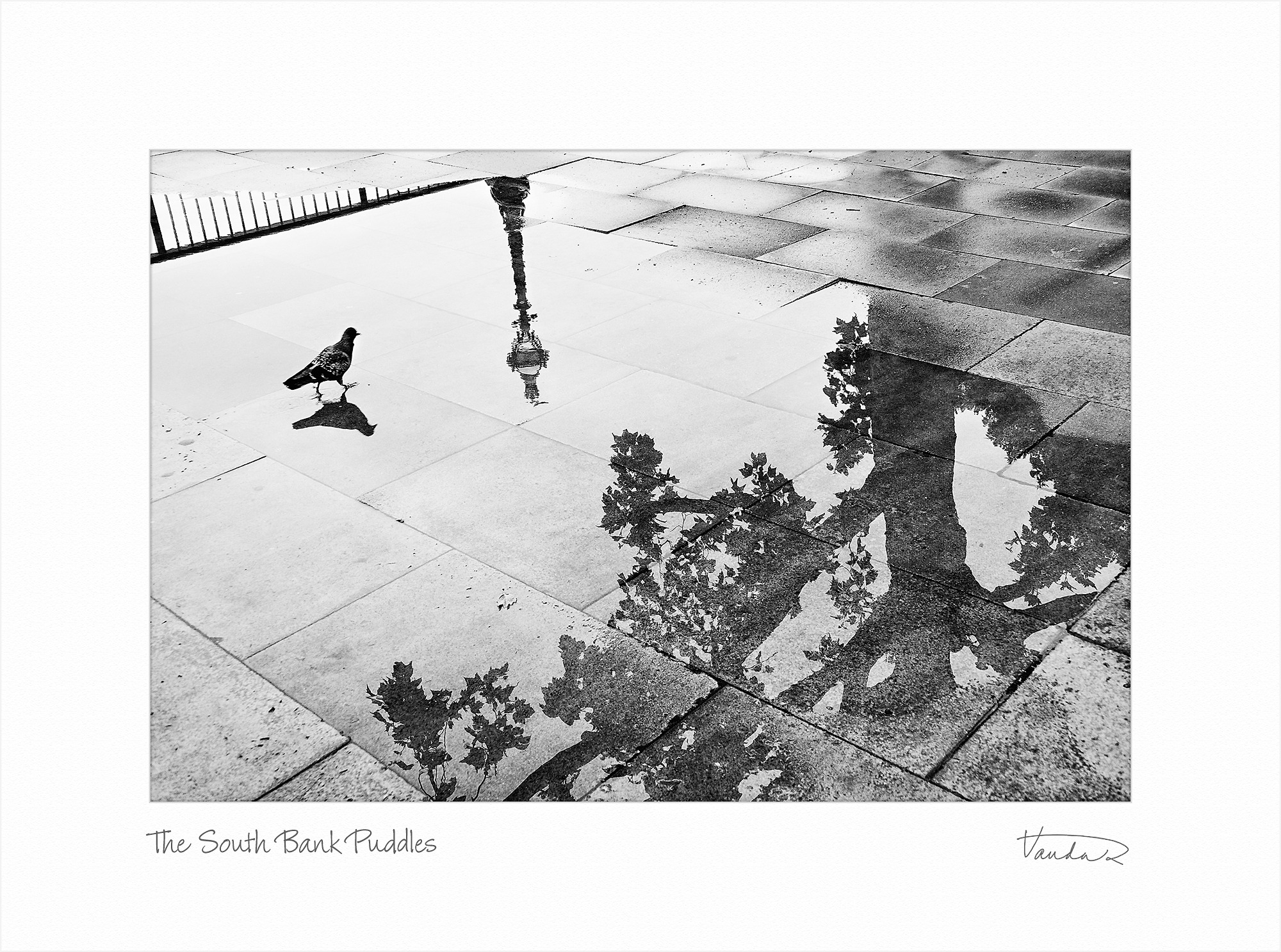 The South Bank Puddles