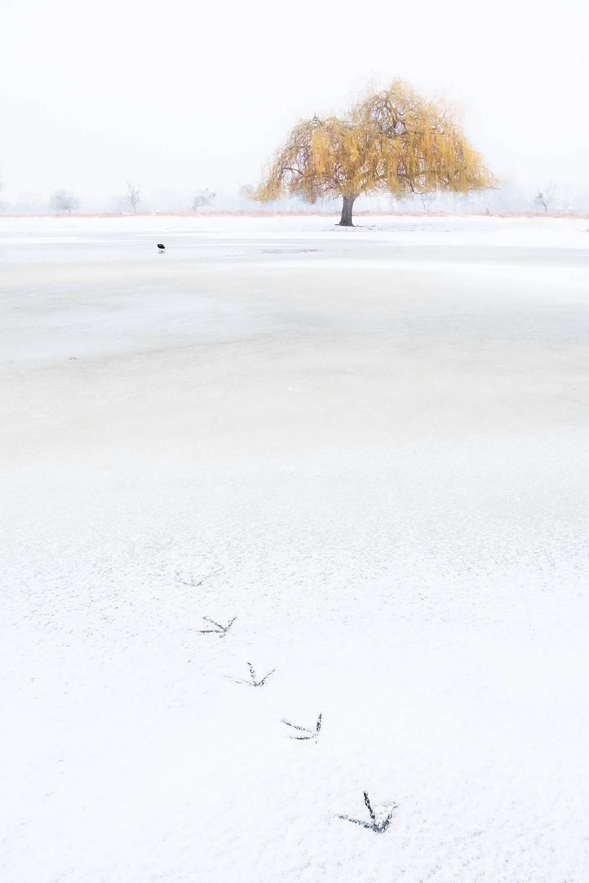 On Frozen Pond
