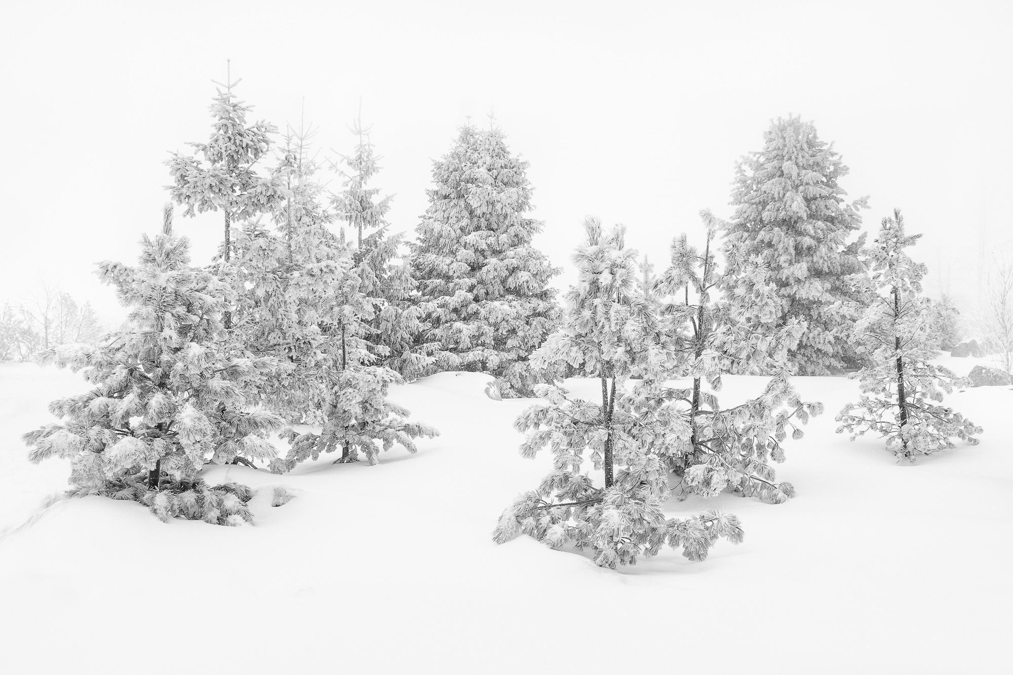 In Winter Wonderland
