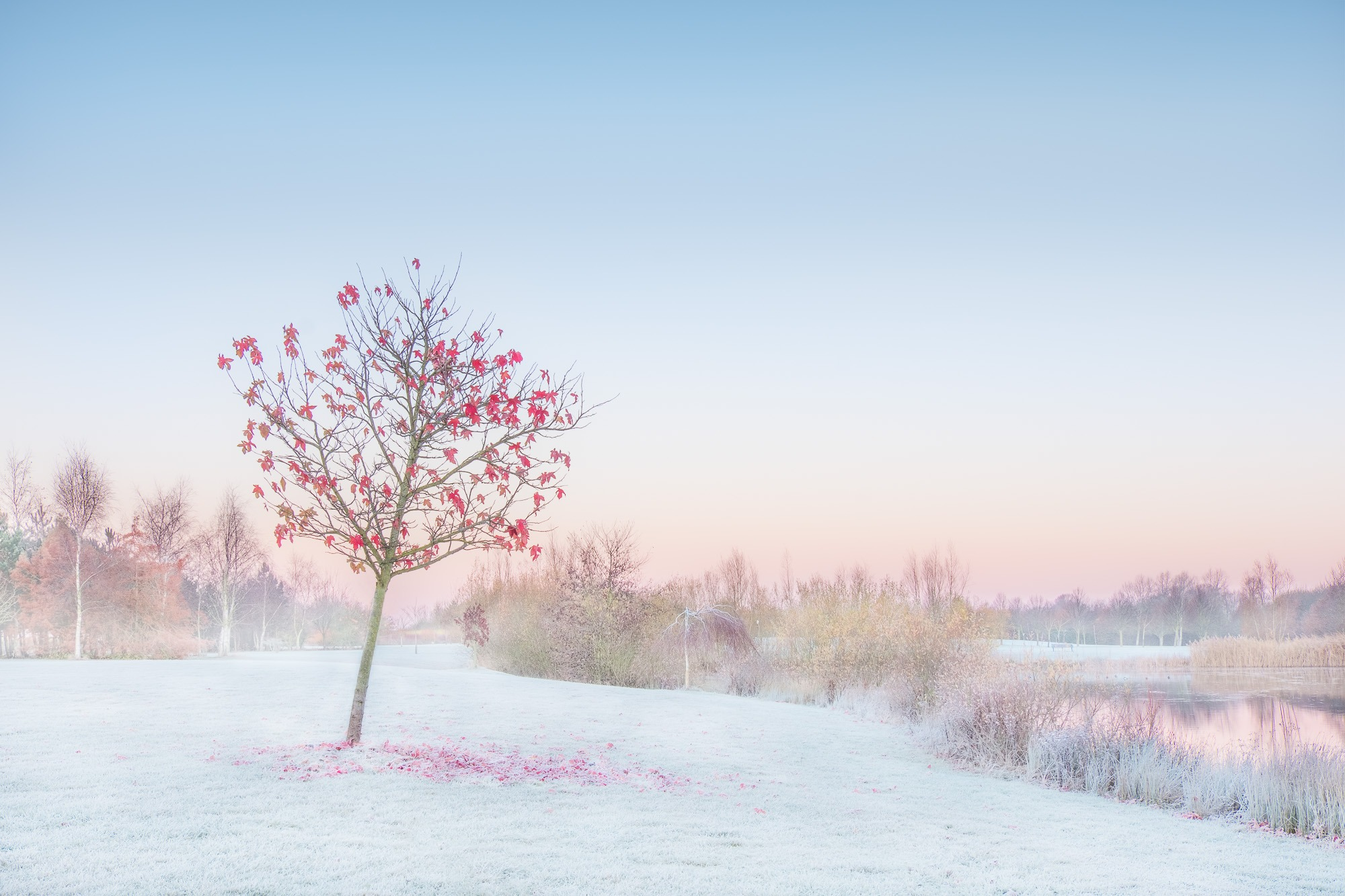 Frosty Wonder