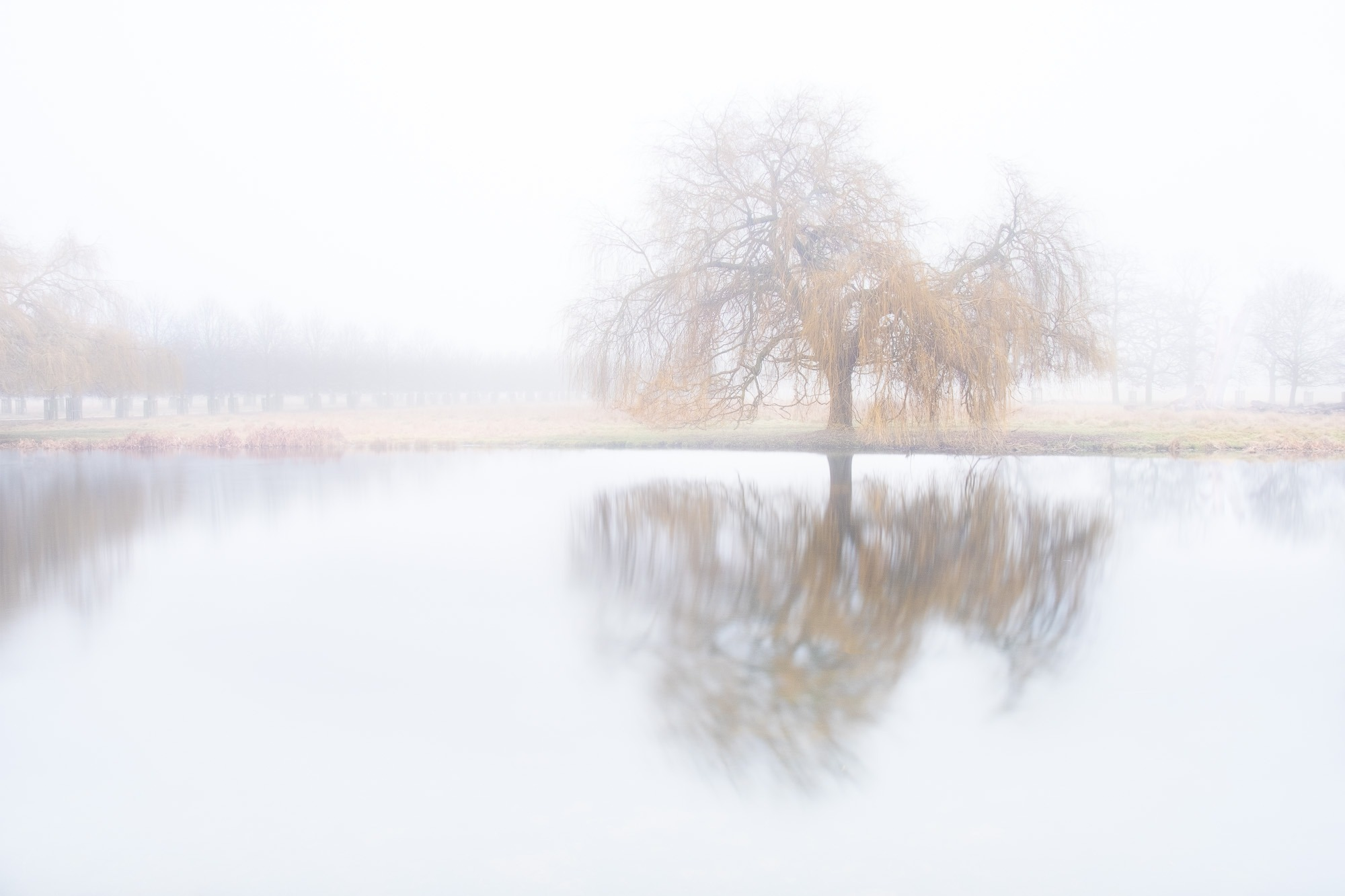 Silent Willow