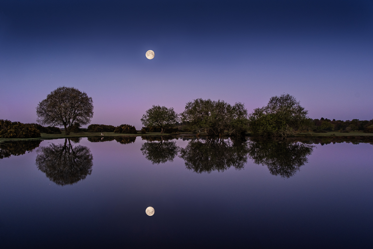 Moonlit Silence